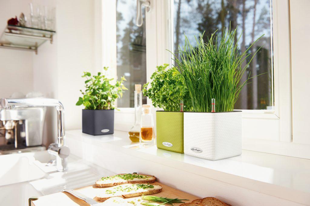 Fresh herbs grow on a kitchen windowsill in Lechuza's self-watering planters