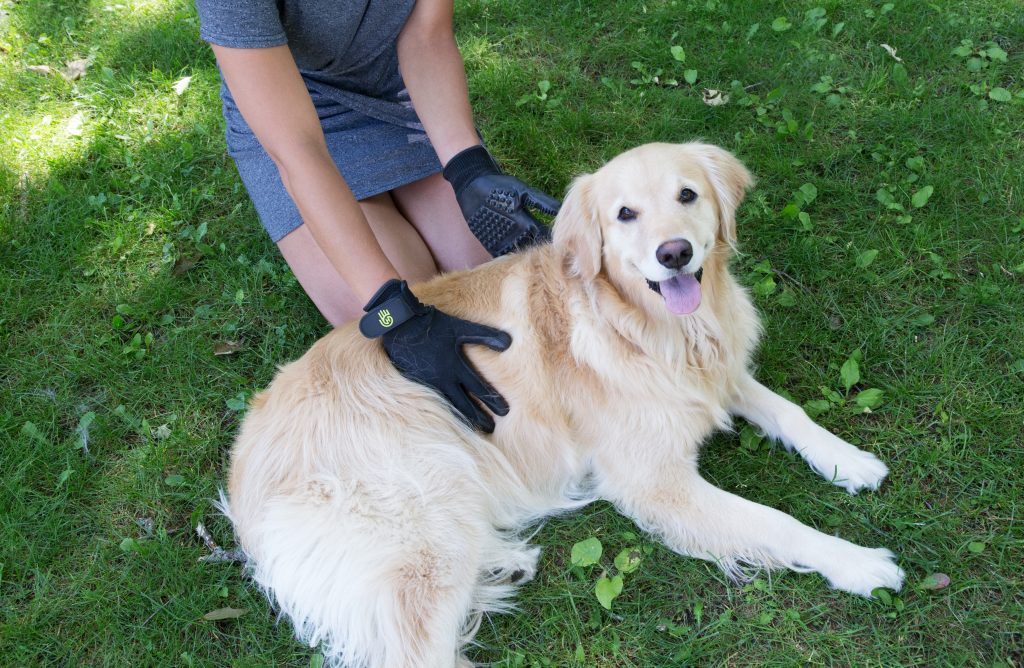 A golden retriever is seen lying on the grass as their owner grooms them with HandsOn Gloves grooved pet grooming gloves