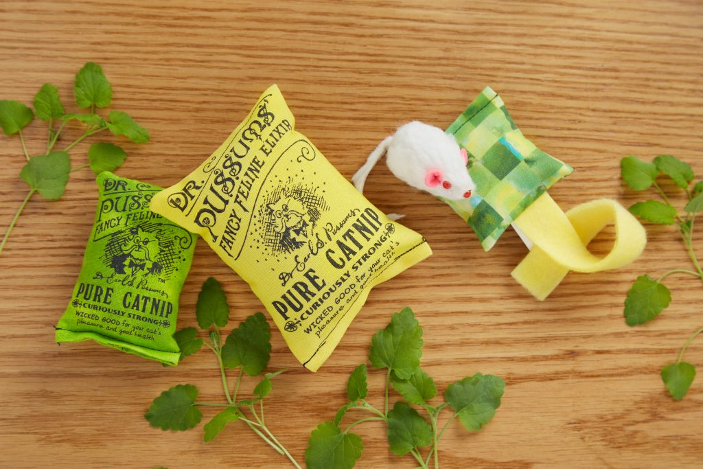 Yellow & green pure catnip bags from Dr. Pussums Cat Company sit on a table