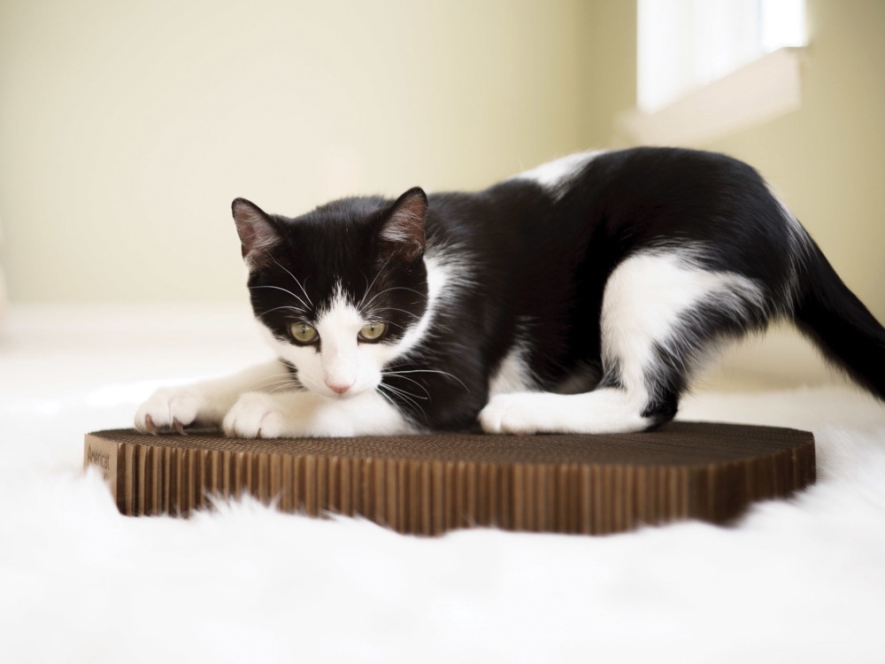 A black & white cat is seen scratching on a durable cardboard cat scratching  pad from Americat Company