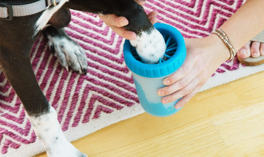 A dog is seen getting his paws cleaned in a blue Dexas Mudbuster silicone dog paw cleaner