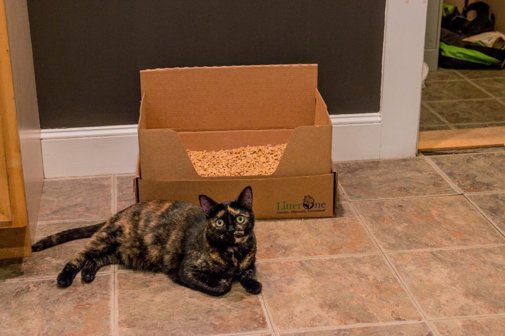 A Calico cat is seen laying next to a Litter One self-contained natural cat litter box