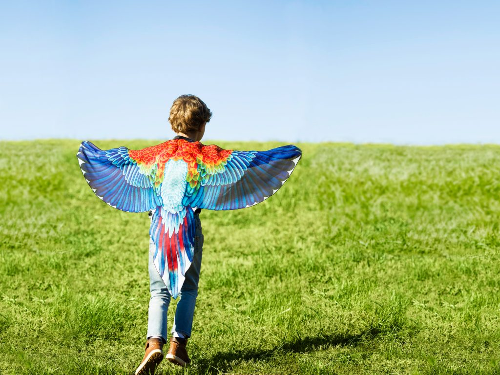 A little boy is seen playing in a field wearing a set of colorful bird play wings
