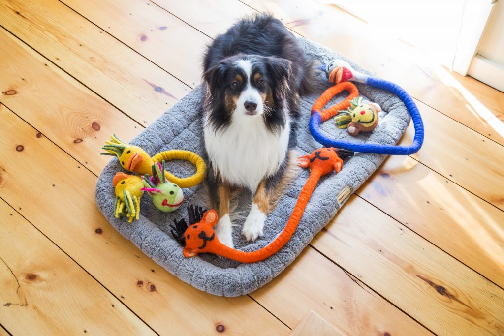 A collie is seen laying in bed with three Le Sharma Trading double-headed dog toys