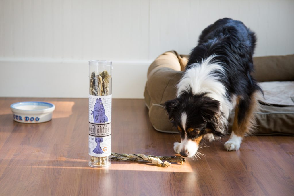 A collie is seen sniffing a cod skin treat from Polkadog Bakery